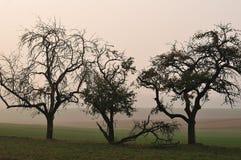 Árboles frutales en mañana brumosa del otoño foto de archivo libre de regalías