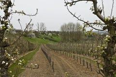 Árboles frutales florecientes en primavera en la huerta comercial Fotos de archivo libres de regalías