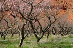Árboles frutales y roca roja Moab Fotos de archivo libres de regalías
