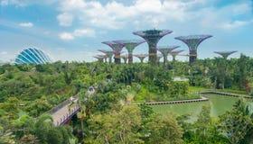 Árboles futuristas enormes en un jardín exótico Imágenes de archivo libres de regalías