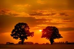 Árboles gemelos en la puesta del sol Fotografía de archivo libre de regalías