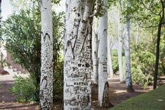 Árboles grabados Imagenes de archivo