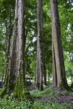 Árboles grandes Fotografía de archivo