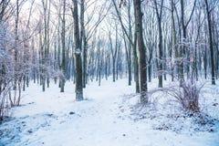 Árboles grandes del parque en el invierno Imagen de archivo libre de regalías