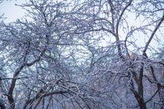 Árboles grandes del parque en el invierno Fotografía de archivo