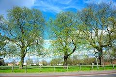 Árboles grandes en el parque Imágenes de archivo libres de regalías