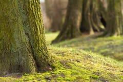 Árboles grandes en el parque 3 Imágenes de archivo libres de regalías