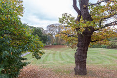 Árboles grandes en el parque en otoño Foto de archivo libre de regalías