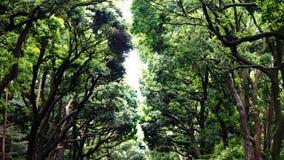 Árboles grandes a lo largo de la calzada Fotografía de archivo libre de regalías
