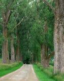 Árboles grandes que alinean la trayectoria que camina Foto de archivo libre de regalías