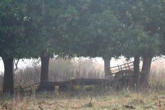 Árboles, grupo, hierba, bullo, carro de buey, árboles de mango, naturaleza, foto de archivo libre de regalías