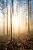 Árboles hechos excursionismo en el amanecer Imagen de archivo libre de regalías