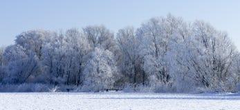 Árboles helados Fotos de archivo