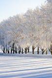 Árboles helados Imagen de archivo