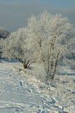 Árboles helados Imagenes de archivo