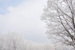 Árboles helados Imagen de archivo libre de regalías