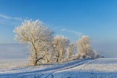 Árboles helados blancos en paisaje nevado Fotografía de archivo