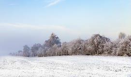 Árboles helados blancos en paisaje nevado Imagenes de archivo