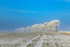 Árboles helados blancos en paisaje nevado Fotos de archivo libres de regalías