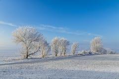 Árboles helados blancos en paisaje nevado Foto de archivo libre de regalías