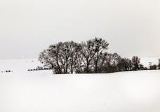 Árboles helados blancos en paisaje nevado Imágenes de archivo libres de regalías