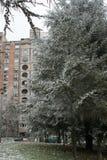 Árboles helados con nieve en el día de invierno frío Imagen de archivo