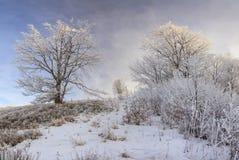 Árboles helados contra un cielo azul en una mañana Imagenes de archivo