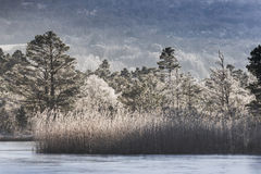 Árboles helados en el lago Garten en Escocia Fotos de archivo