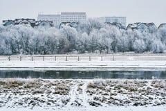 Árboles helados en el río Fotos de archivo libres de regalías