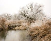 Árboles helados en el río Paar Fotos de archivo libres de regalías