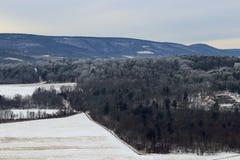 Árboles helados en el valle Fotografía de archivo libre de regalías