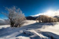 Árboles helados en un invierno de la salida del sol Fotos de archivo