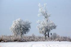 Árboles helados a lo largo del camino Imagen de archivo