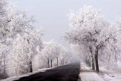 Árboles helados a lo largo del camino Foto de archivo libre de regalías