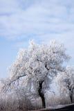 Árboles helados a lo largo del camino Fotos de archivo