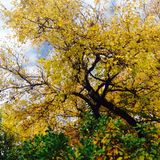 Árboles hermosos Foto de archivo libre de regalías