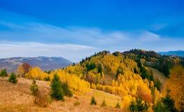 Árboles hermosos amarillos Fotografía de archivo libre de regalías