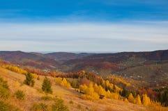 Árboles hermosos amarillos en las montañas imagen de archivo