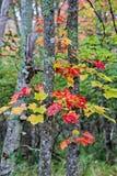 Árboles hermosos con las hojas de otoño fotografía de archivo libre de regalías