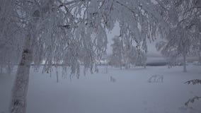 Árboles hermosos, cubiertos por la nieve en invierno almacen de metraje de vídeo