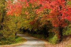 Árboles hermosos de la caída con curvar el camino Imagenes de archivo