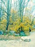 Árboles hermosos de la caída de U P michigan fotografía de archivo