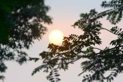 Árboles hermosos de la oscuridad de la puesta del sol Fotografía de archivo