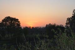 Árboles hermosos de la oscuridad de la puesta del sol Fotos de archivo