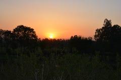 Árboles hermosos de la oscuridad de la puesta del sol Foto de archivo