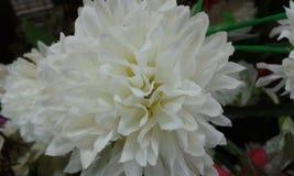 Árboles hermosos de las flores Foto de archivo libre de regalías