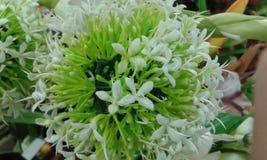 Árboles hermosos de las flores Foto de archivo