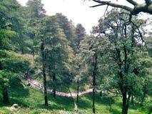 Árboles hermosos de Manali Fotografía de archivo
