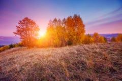 Árboles hermosos del otoño Fotografía de archivo libre de regalías