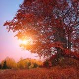 Árboles hermosos del otoño Imagen de archivo